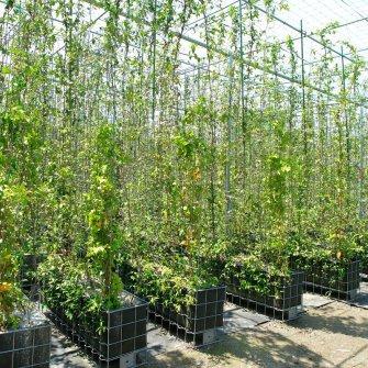 京都に自生する植物で、街中にあふれる緑を! 「5×緑」が作り出す癒しのウォールカーテン