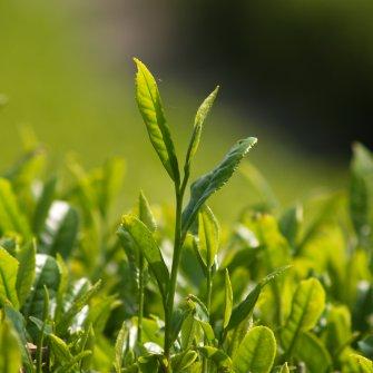 """日本茶で""""ゆんたく""""お茶会《 2021年5月23日(日)開催 》"""