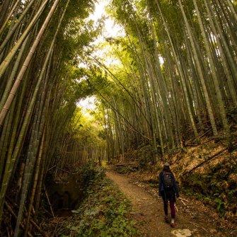 【NATURE TOUR】京都一周トレイル:伏見桃山〜伏見稲荷コース《4月》