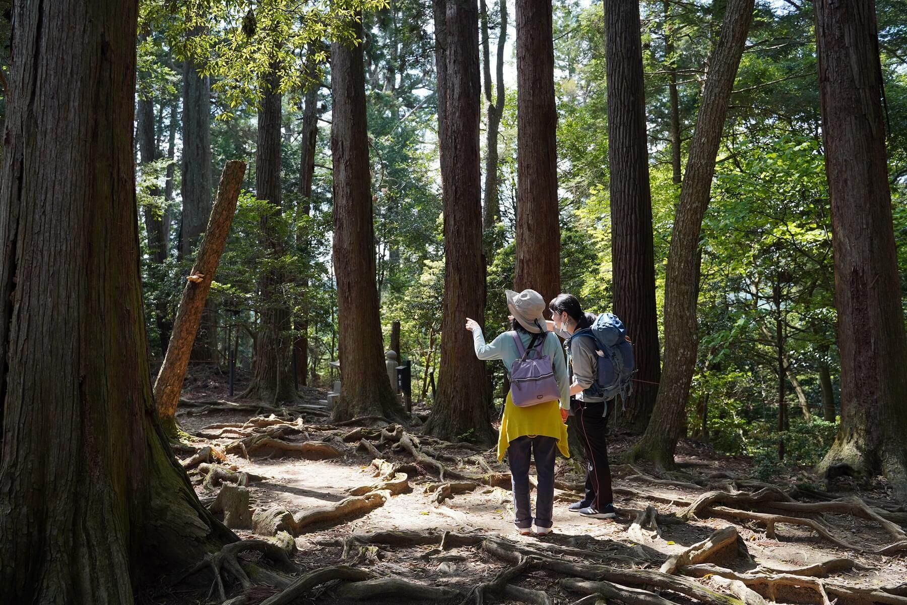 【NATURE TOUR】京都一周トレイル:⑥大原〜貴船コース《5月》